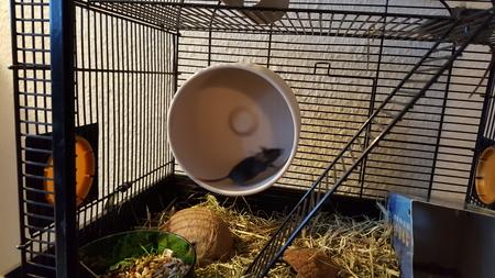 la rueda del ratón
